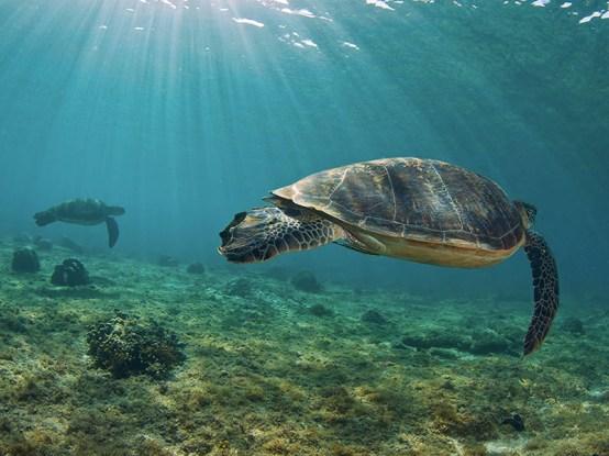 Schildkröte-1